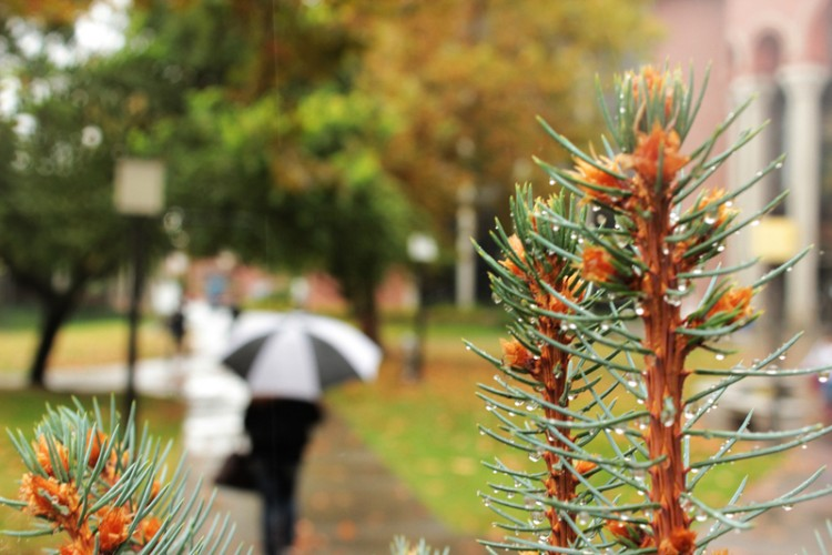Wet tree branches from the rain as a student holding an umbrella walks down the campus quad.