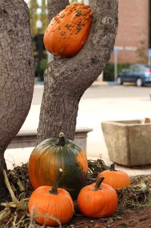 A group of pumpkins rest against a tree.