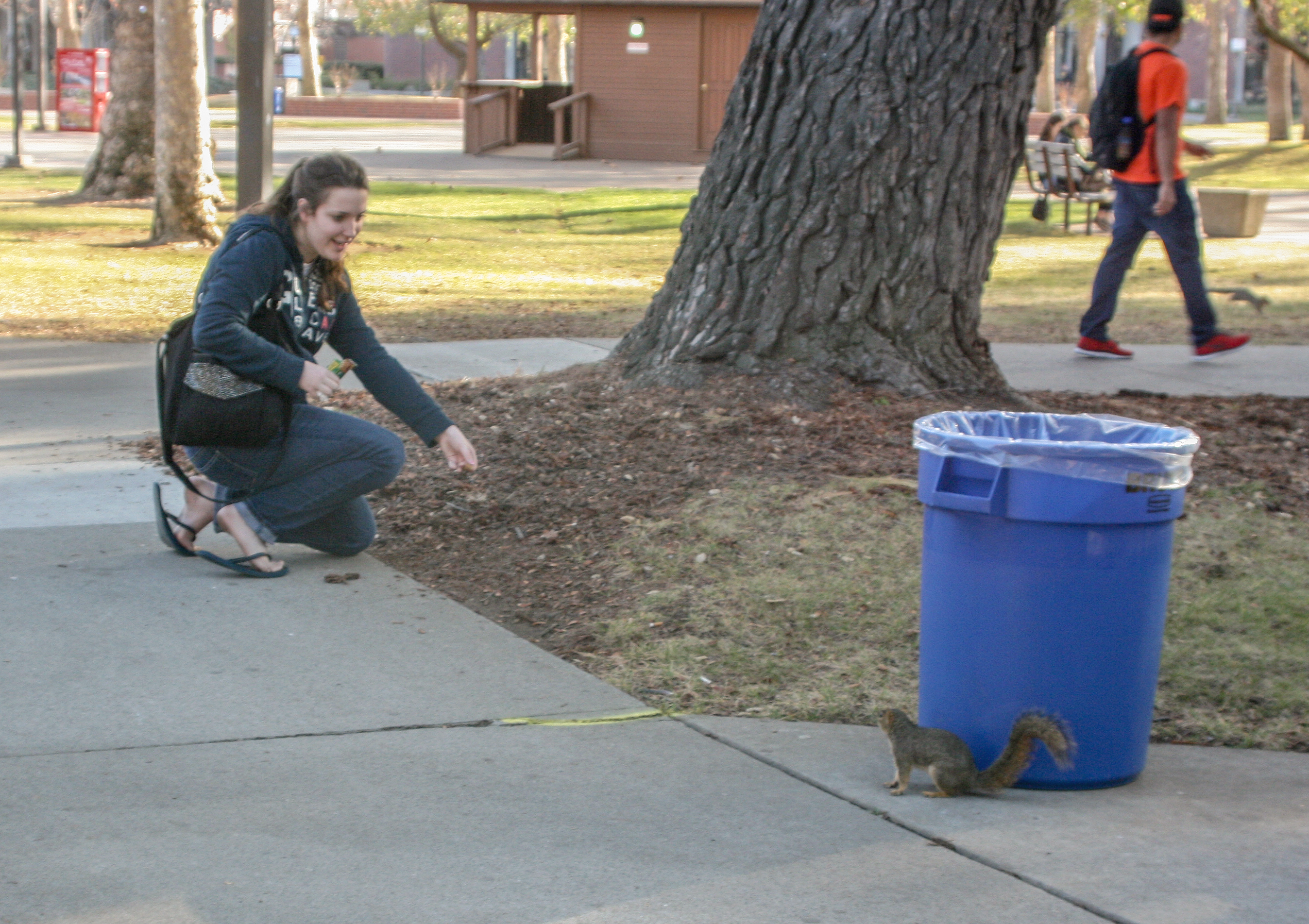 City College biology major Sarah Harms feeds a squirrel Jan. 24 in the Quad. Teri Barth | Online Editor | express.teri.barth@gmail.com