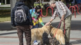 Mr. Cliff Popejoy walking his three dogs through campus April 6, 2015. He stopped to let City College students pet them. Chris Williams | Staff Photographer.