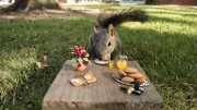 An eastern fox squirrel dines in fine fashion on City College campus. | Photo by Danny J. Mitchell | mitchell.dan.j